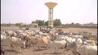 Sénégal sunu reew - Focus sur l'Elevage (Plan Sénégal Emergent)