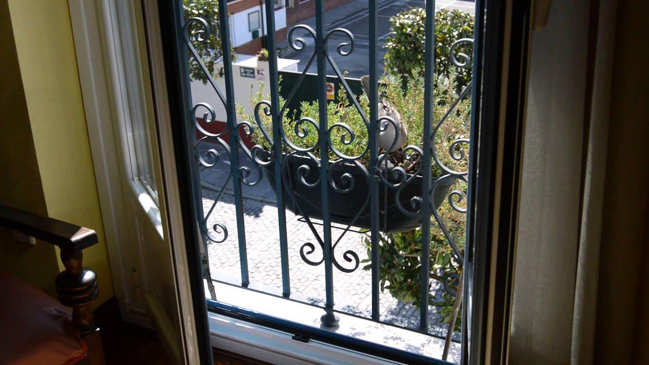 Paloma torcaz anida en un balcon del centro de for Ahuyentar palomas del balcon