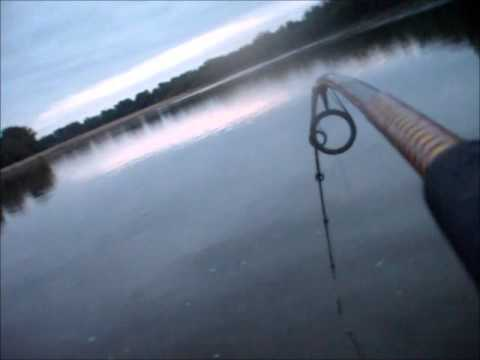 Big Flathead Catfish - YouTube - photo#46