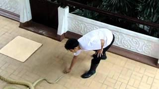 Snake Venom Farm in Bangkok, Thailand