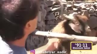 Смешное видео в Азербайджане