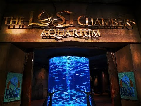 Journey To The Lost Chambers Aquarium 2018 : Discover The Myth Of Atlantis : Marine Animals Dubai
