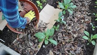 DIY, Eco-Friendly Method for Easy Weeding in Your Backyard Garden