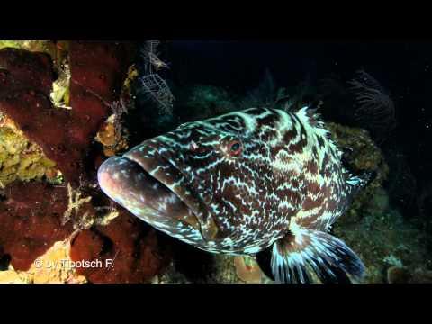 Cuba Diving Jardines de la Reina Sharkdiving