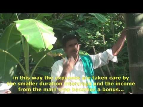 Subhash Palekar's Zero Budget Natural Farming in Action