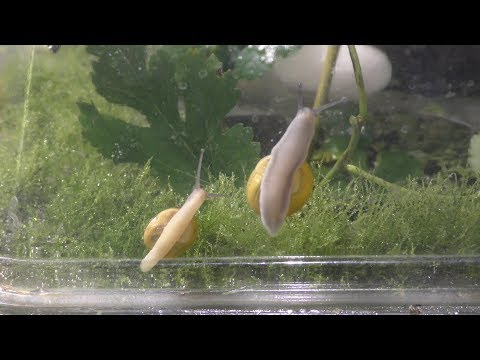 Land Snails Aquarium Garden