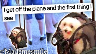 r/Mademesmile | SUITCASE DOG!!
