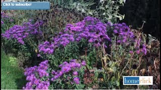 4 Fall Blooming Perennials