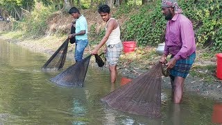 Best Net Fishing ll Big Fish Catching Using By Cast Net ll Fishing in the Village Beautiful Pond