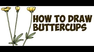 How to Draw a Buttercup Flower Step by Step Easy Flowers Drawing Tutorial