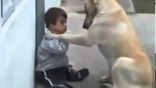 فيديو ابكى العالم... الكلب والطفل المعاق ذهنيا