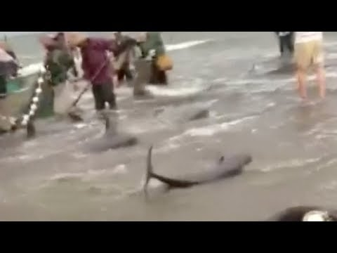 Villagers send dolphins back to sea in south China