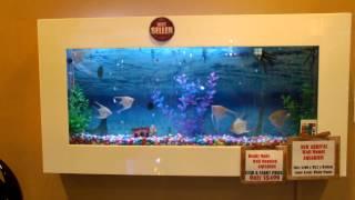 Wall Mounted Aquarium Supply In Singapore