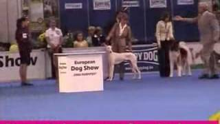 dfs Crufts 2010 Hound Group Winner (outstanding Pharaoh Hound from ...