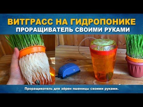 видео: ВИТГРАСС НА ГИДРОПОНИКЕ ЗА 7 ДНЕЙ - Проращиватель своими руками.
