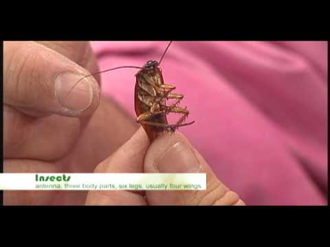 Nature Notes Insects -- Antenna, Three Body Parts, Six Legs, Usually Four  Wings