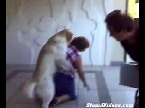 Cachorro Tarado e a Tia