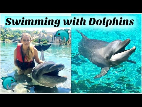 Queensland Vlog - Swimming With Dolphins & Jet Skiing!