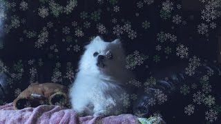 GABE THE DOG CHRISTMAS REMIX | Deck The Halls