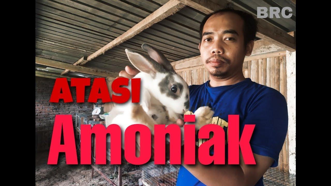 Cara Ternak Kelinci; Pembuatan Kandang Kelinci - YouTube