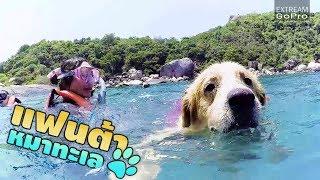 แฟนต้าหมาทะเล ช่วยชีวิตนักท่องเที่ยวที่เกาะเต่า // Koh Tao Rescue Dog
