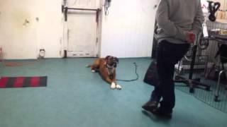 Boxer Rocco