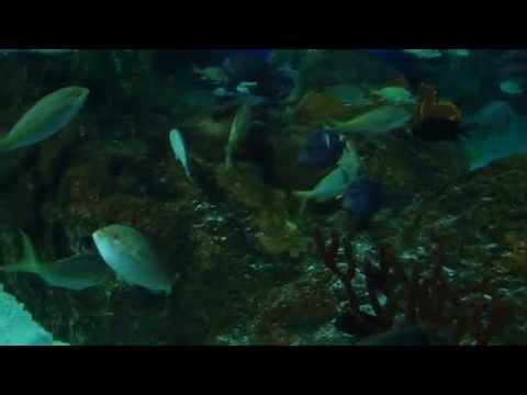 Aquarium  Ripleys Toronto