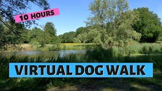 VIRTUAL DOG WALKING | Dog Walk In Beautiful Park (Original Sound)