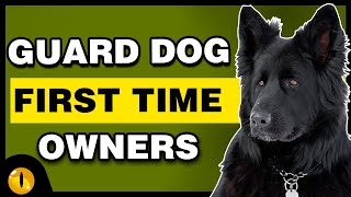 TOP 10 GUARD DOGS FOR FIRST TIME OWNERS