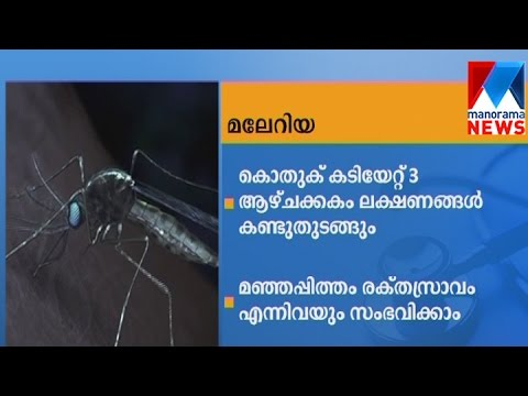 Symptoms, causes and diagnosis of Malaria  | Manorama News