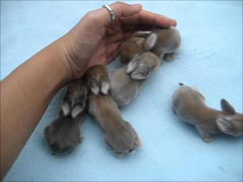 Coco'd Litter : Baby bunnies 1 week old