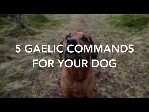 What's The Gaelic For... Your Dog?