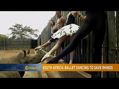 South Africa: Ballet dancing to save rhinos [The Morning Call]