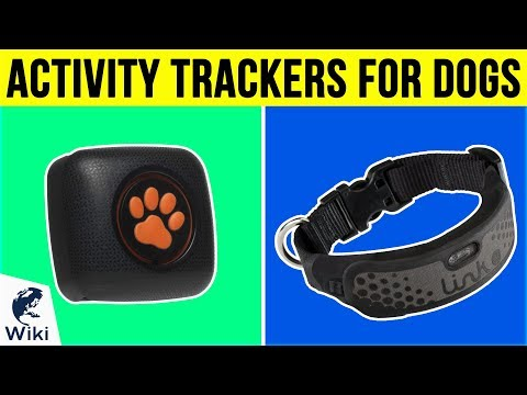 8 Best Activity Trackers For Dogs 2019