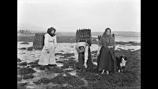 Lecture 17: Seaweed and its Wars - Ireland's Contested Resource by Cathal Dowd-Smith