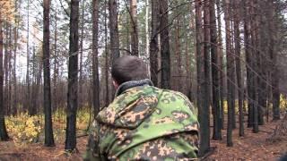 видео Харза: способы охоты