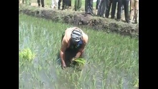 JICA gives 5.3b grant for rice farming