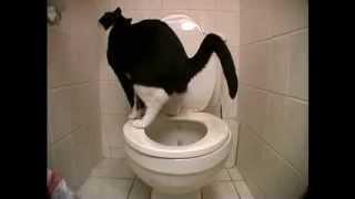 Шокирующее видео Кот срёт в унитаз