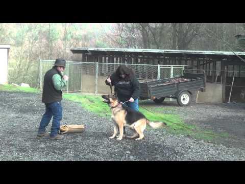Schilling Law Dog's Training By Ken Schilling