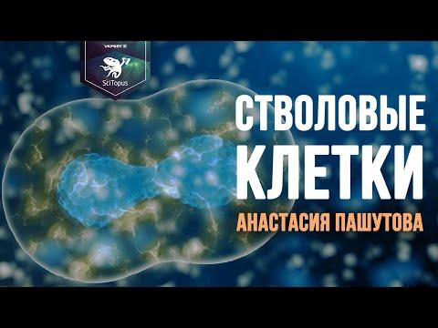 Стволовые клетки. Анастасия