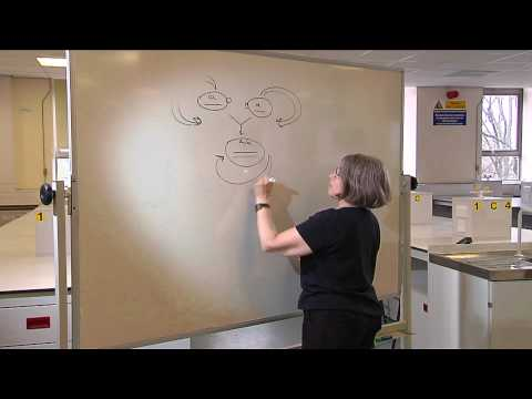 The Life Cycle of Yeast - Professor Rhona Borts