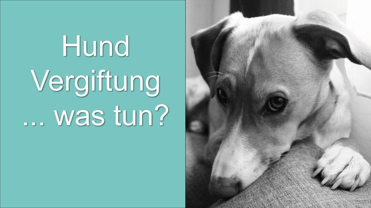 Hund Vergiftung... Was Tun?