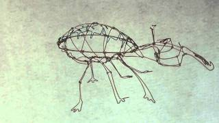 3D Gold Bug Wire Sculpture.mov