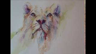 Lion sketch in watercolour