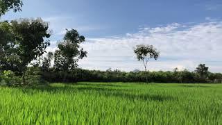 MLV AGRICULTURE at Mukkulam Village in Karimangalam Dharmapuri  #MukkulamVillage #mlvagriculture