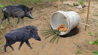 Amazing Quick Wild Pig Trap Using Plastic Buckets - How To Make Wild Pig Trap & Buckets (Work 100%)