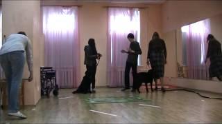 Екатеринбург тестирование собаки терапевта румба лабрадор сдано
