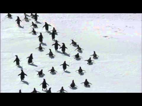 The Ross Sea Wildlife