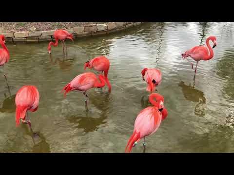 Meet the Neighbors: Flamingo Legs