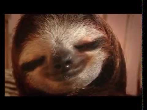 meet the sloths documentary 2013 ford